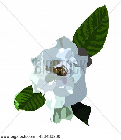 White Gartenia Flower With Leaves Spring. Realism Style. Vector Stock Illustration Isolated On White