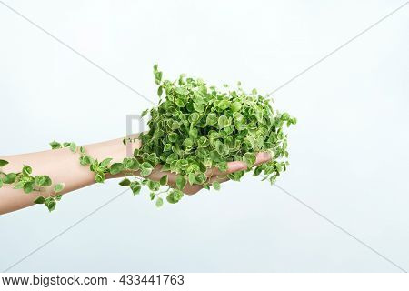 Sustainable living environmentalist hand holding plant