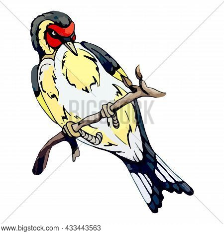 American Goldfinch Sits On A Tree Branch. Small Park Bird With Bright Yellow Plumage. Forest Goldfin
