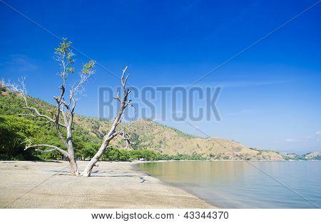 areia branca beach view near dili east timor poster