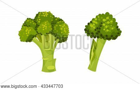 Broccoli Cabbage As Edible Green Plant With Stalk And Flowering Head Vector Set