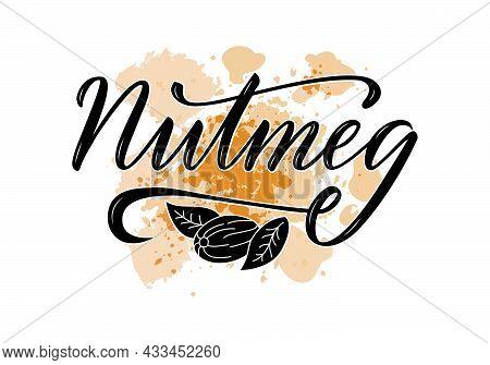 Vector Illustration Of Nutmeg Lettering For Packages, Product Design, Banner, Spice Shop, Price List