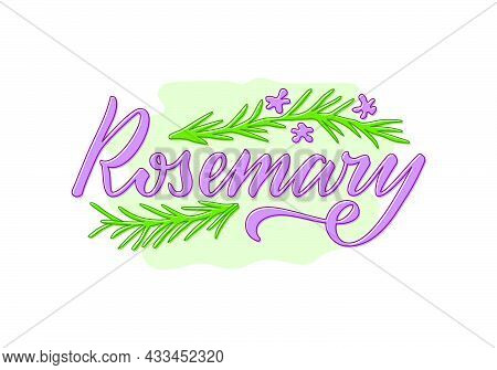 Vector Illustration Of Rosemary Lettering For Packages, Product Design, Banner, Spice Shop  Price Li
