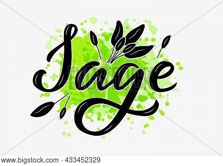 Vector Illustration Of Sage Lettering For Packages, Product Design, Banner, Spice Shop  Price Lists.