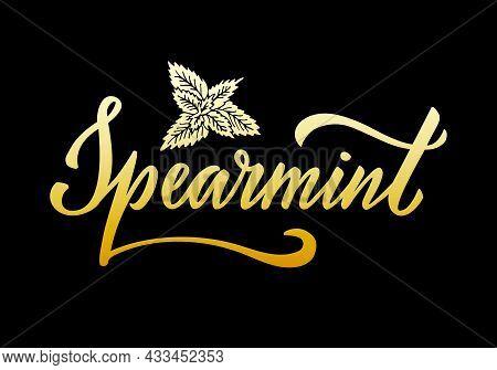 Vector Illustration Of Spearmint Lettering For Packages, Product Design, Banner, Spice Shop  Price L