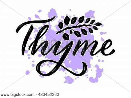 Vector Illustration Of Thyme Lettering For Packages, Product Design, Banner, Spice Shop  Price Lists