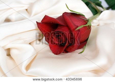 Red rose and white silk and the concept of the wedding feast poster