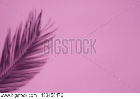 Trending Concept In Natural Materials With Palm Leaves Shadow On Pink Background. Presentation With