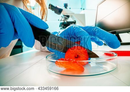 Inspection of the quality of vegetables and fruits in the laboratory of food quality