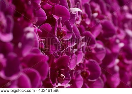 Background of pink orchids with selective focus.