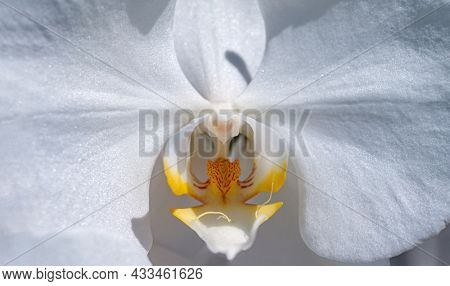 Close-up of white orchids on light background.