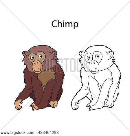 Funny Cute Animal Chimp Isolated On White Background. Linear, Contour, Black And White And Colored V
