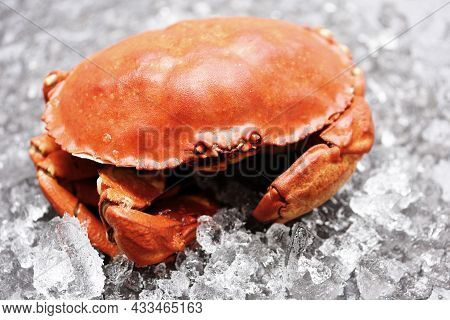 Fresh Crab On Ice, Seafood Shellfish Steamed Red Crab Or Boiled Stone Crab