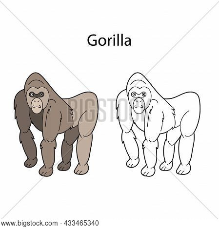 Funny Cute Animal Gorilla Isolated On White Background. Linear, Contour, Black And White And Colored