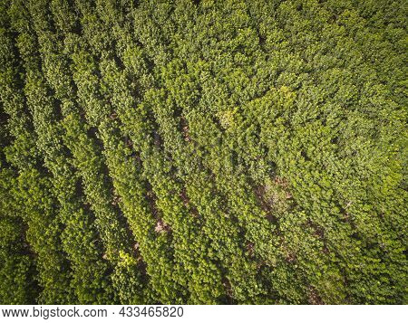 Aerial View Forest Tree Rubber Tree Leaves Environment Forest Nature Background, Texture Of Green Tr