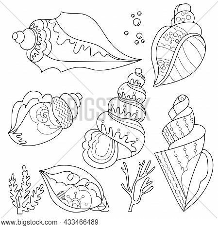 Contour Linear Illustration With Shell Set. Cute Shells, Anti Stress Picture. Line Art Design For Ad