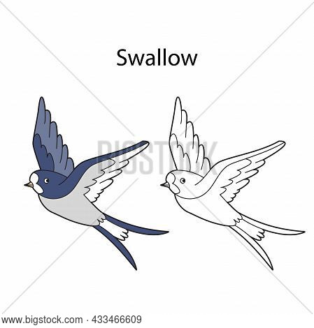 Funny Cute Bird Swallow Isolated On White Background. Linear, Contour, Black And White And Colored V