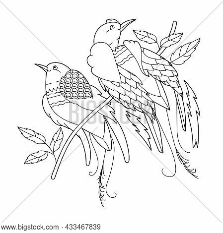 Contour Linear Illustration For Coloring Book With Two Paradise Birds. Beautiful Tropical Exotic Bir