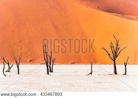 The skeletons of dead trees. Sossusflei is a clay plateau in the Namib Naukluft Park. Namibia. Africa. Huge scenic red and orange sand dunes. Hot sunny morning in the Namib desert.