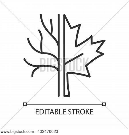 Maple Tree Linear Icon. Official Canadian Emblem. Species Of Trees In Canada. Maple Leaf Symbol. Thi