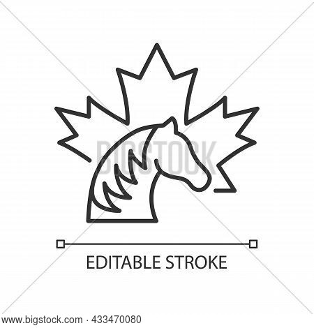 Canadian Horse Linear Icon. National Heritage And Symbol Of Canada. Rare Breed. Strong Stallion. Thi