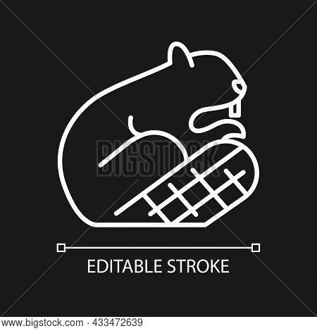 Beaver White Linear Icon For Dark Theme. Symbol Of Sovereignty. Herbivore Wild Animal. Beaver Dam. T