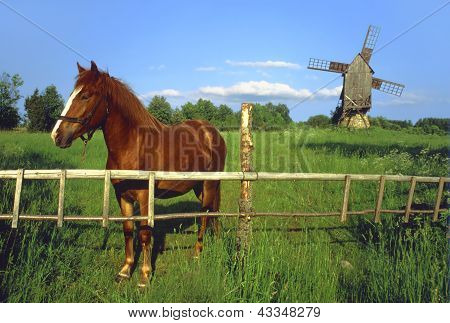 Horse and old windmill in countryside Estonia. poster