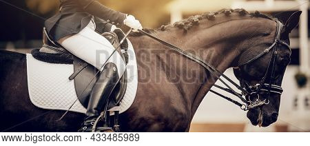 A Rider's Hand In A White Glove With A Rein. Pigtails On Neck Sports Horse. Portrait Sports Stallion