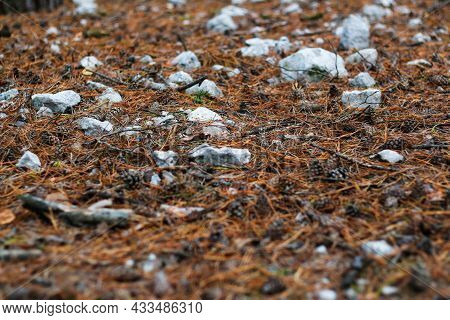 Defocus Fur And Pine Forest Floor Of Crushed Stones In Mound Or Memorial. White Rock, Minerals, Arch