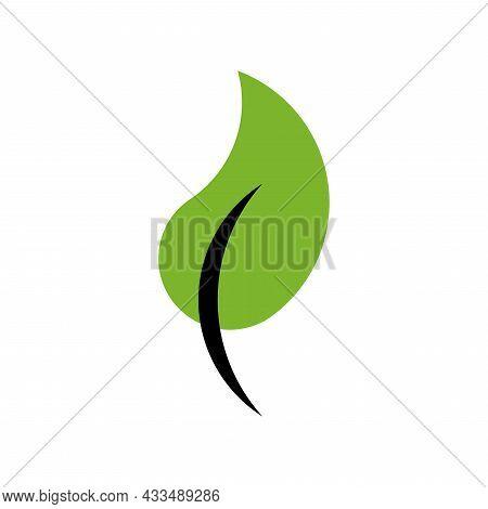 Vector Leaf In Golden Ratio Style. Editable Illustration