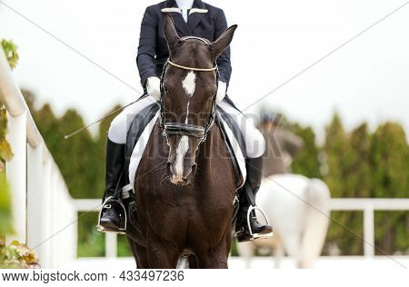 Dressage. Horse Portrait Before Start. Horse Rider Girl And Horse. Equestrian Competition Show. Spor