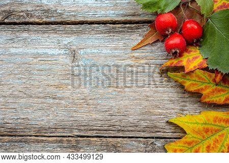 Hawthorn Branch With Several Berries  Hawthorn On Background Of Old Vintage Retro Board. Autumn Deco