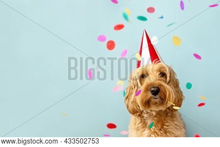 Cute dog celebrating at a birthday party with confetti and party hat