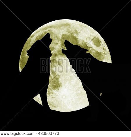 A Wolf Howls At The Night Moon. A Hungry Predator Hunts Its Prey In The Dark. A Pack Of Terrible Pre