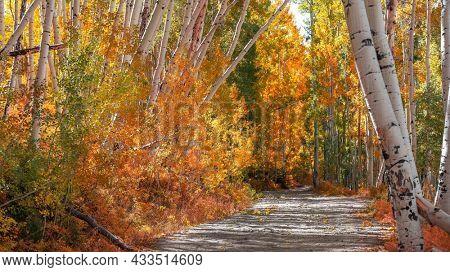 Colorful Aspen trees along Last dollar road in Colorado