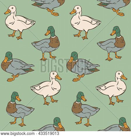 Vector Seamless Pattern With Ducks. Domestic And Wild Ducks On Green Background.