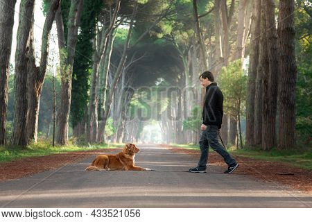 Dogs And Men On Path Among The Autumn Trees. Nova Scotia Duck Tolling Retriever In Nature. Obedient