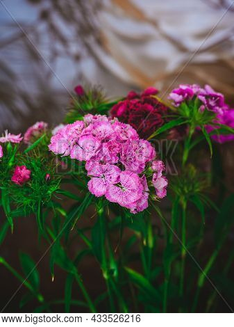 Beautiful Bouquet Of Flowers Sweet William On The Background Of A Stained Glass Window
