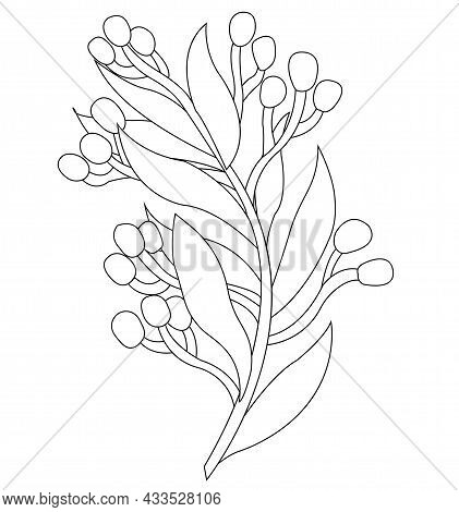 Spring. Sprig With Flowers And Leaves. Doodle Style. Celebration, Wedding. Vector Stock Illustration