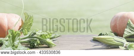 Autumn Harvest. Pumpkins With Leaves On Green Background.concept Of Thanksgiving Day Or Halloween. S
