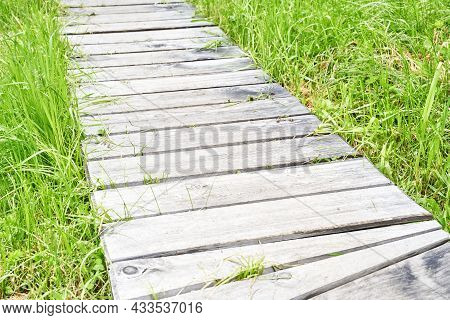 Wooden Path At Forest. Long Track. Pathway Hike Board. Landscape Trekking Way. Outdoors. Green Grass