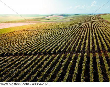 Italian Countryside Beautiful Farms And Vineyards Beautiful Aerial View. Countryside Italy. Cinemati