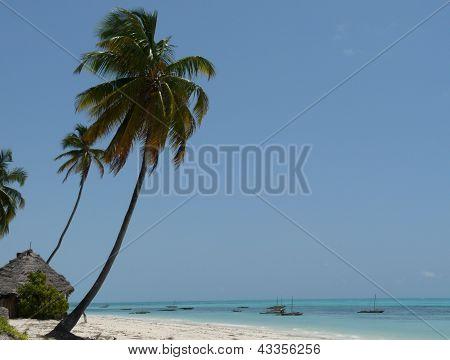Tropical beach with tall palms
