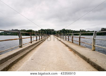 Bridge In A Swamp