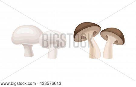 Edible Mushrooms Species Set. Champignon And Shiitake Mushroom Vector Illustration