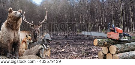 Bear, Deer, Fox, Wolf, Badger And Hare In The Middle Of A Felled Forest And A Bunch Of Trees With A