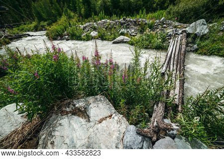 Small Pink Flowers Of Fireweed On Background Of Fast Turbulent Mountain Creek With Log Bridge. Sceni