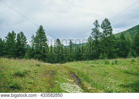 Green Mountains Landscape With Old Dirt Road Overgrown With Grasses And Flowers To Forest Edge On Hi