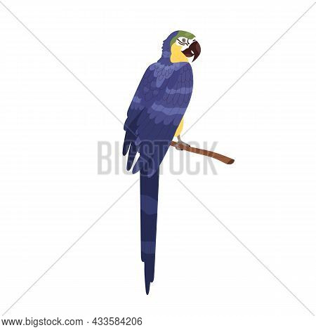 Ara Macaw Sitting On Branch. Large Tropical Parrot With Long Tail And Folded Wings. Exotic Jungle Bi