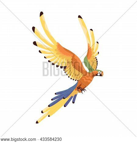 Macaw Flying With Multicolored Spread Wings. Large Tropical Ara Parrot With Long Tail. Exotic Jungle
